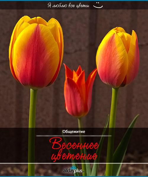 Я люблю все цветы, часть 8
