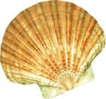 NLD I Sea You Addon Shell (3).png