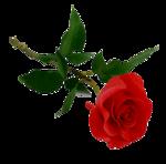 http://img-fotki.yandex.ru/get/6303/136834661.6f/0_86ffe_599baa88_S.jpg