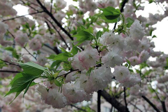 Цветы в Хайнине