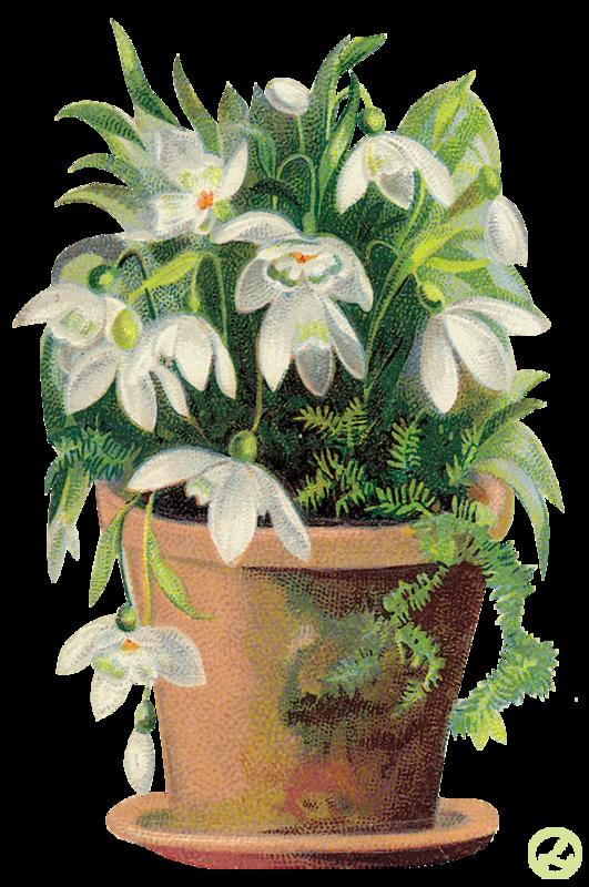 Комнатные растения открытки, днем