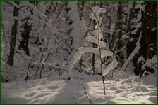 http://img-fotki.yandex.ru/get/6303/15842935.41c/0_f182c_339d542f_orig.jpg