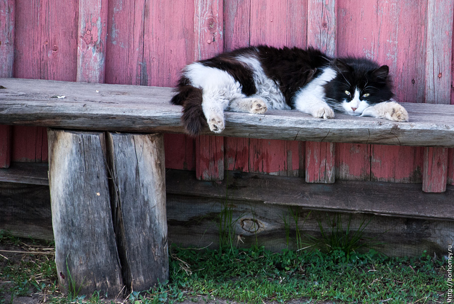 кот спит на лавочке
