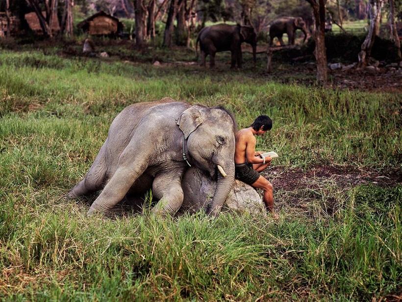 Стив Маккарри: гениальные снимки гениального фотографа 0 e3b05 c2bbee21 orig