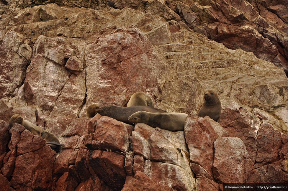 0 161748 5b56f9c6 orig Национальный парк Паракас и острова Бальестас в Перу