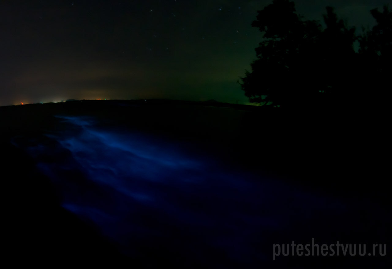планктон фото светящийся