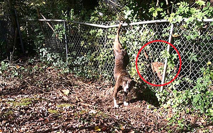 Собака оставалась в течение двух дней со своей подругой, попавшей в беду (6 фото)