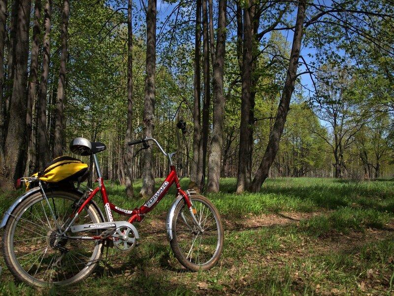 велосипед на фоне дубовой рощи