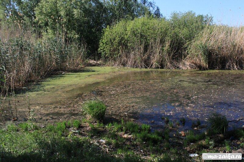 Пейзажи Тинь-Зинь, район озера Сазанка, Энгельс, 19 мая 201 года