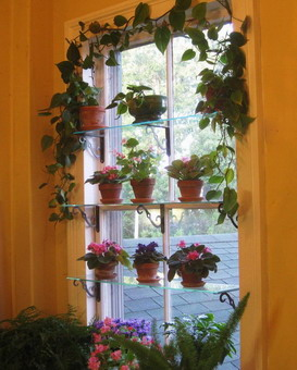 Комнатные растения на полках на окне