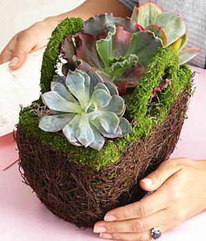 Идеи для упаковки цветочных горшков