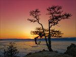 Закат у дерева желаний