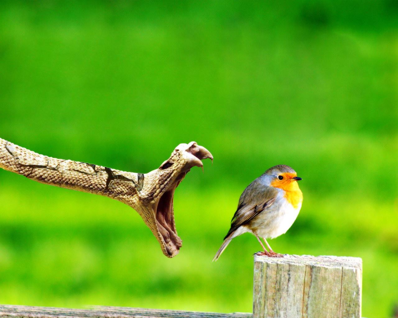 Прикольные животные. Подборка обоев самых красивых птиц. птиц», dodjik007, ЯндексФоткахltmore, красивых, самых, альбоме, «Подборка, обоев, Фотографии