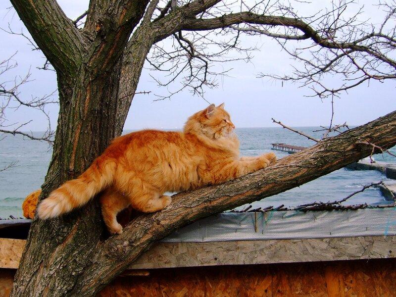 Рыжий котяра