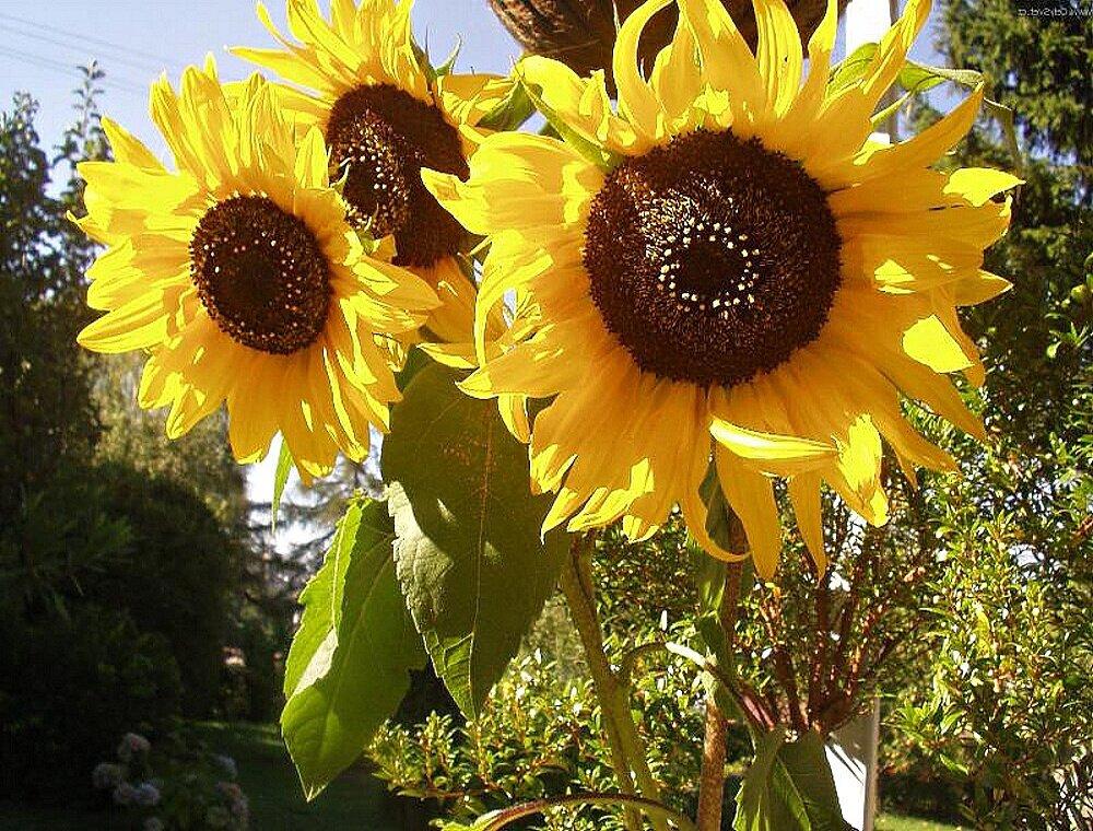 Обыденность одного летнего дня заслуживает внимания