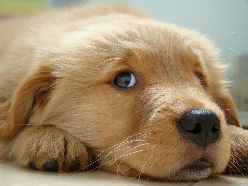 Little cute Dax by Deniseop
