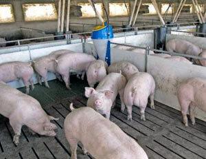 Более 40 миллиардов рублей намерена инвестировать компания «Русагро» в создание мясного производства в Приморье