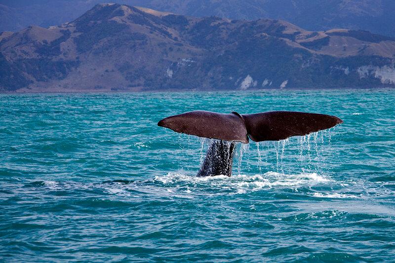производится штатные можно ли увидеть китов на тенерифе одних цыган это