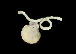 JofiaD-windfromsea-shell3.png