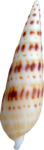 NLD I Sea You Shell (5).png