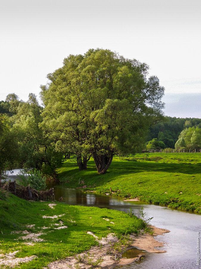 красивое дерево в Балыково