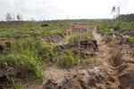 лесопосадки Шатура дуб Тугеза_1.jpg