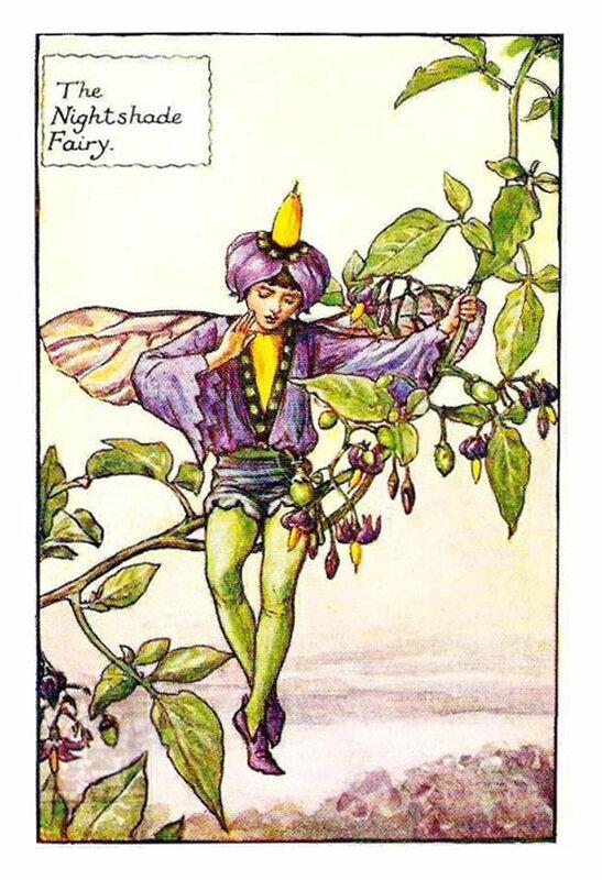 Сесиль Мери Баркер. Эльф и цветы паслёна.