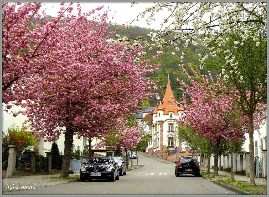 Цветущий апрель