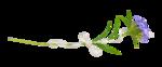 «La_magie_des_fleurs» 0_8628a_94d8323c_S