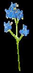«La_magie_des_fleurs» 0_86296_b4c67d6a_S