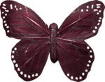 «A butterfly is a flying flower»  0_86a2c_83ef6eed_S