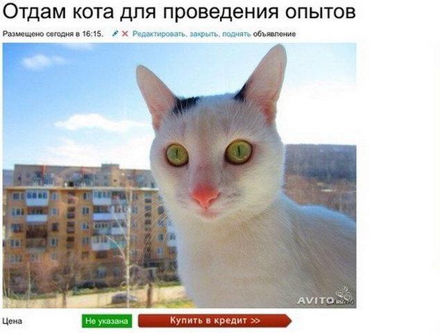 Отдам кота для проведения опытов