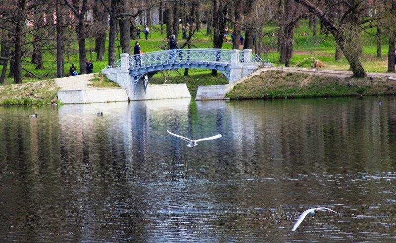 Чайки над озером
