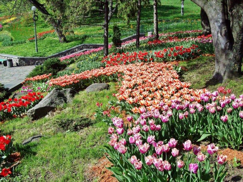 Фигурная высадка тюльпанов