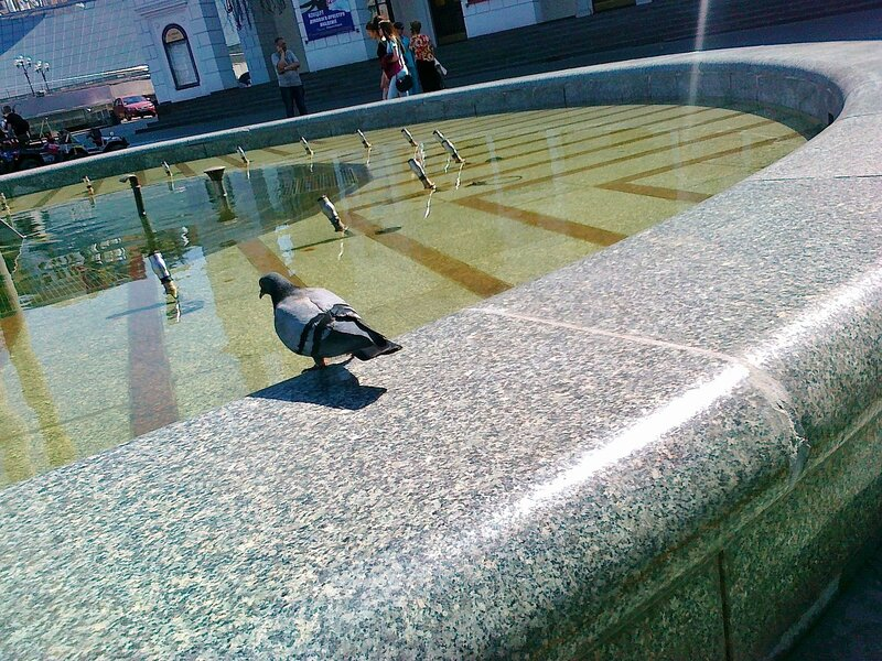 Голубь у фонтана на Майдане Незалежности