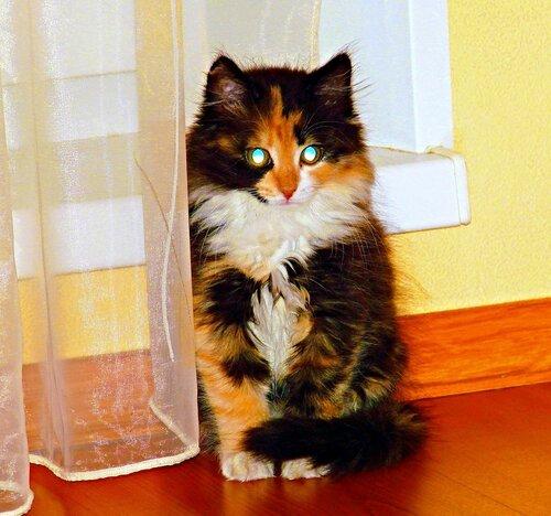 Кошечка счастья с  бирюзовыми глазами