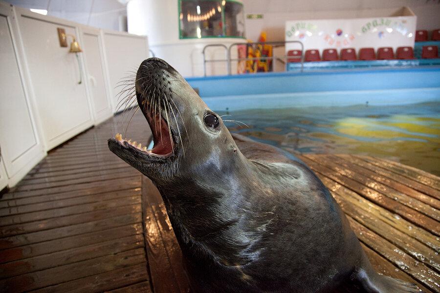 Прокуроры нашли в мурманском океанариуме тюленей из Красной книги