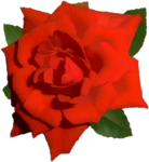 bright-red-rose-01.png