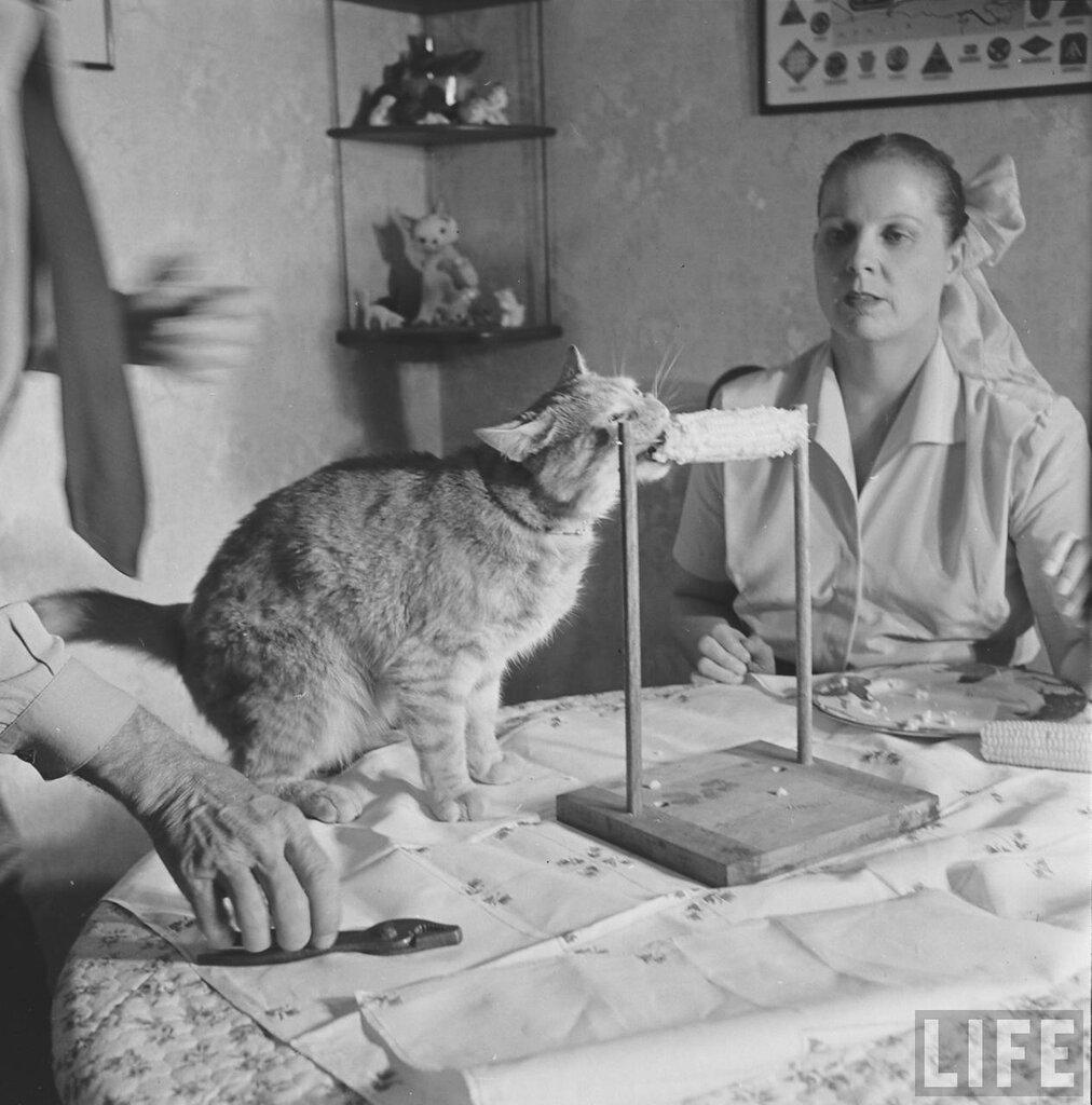 Cat Eats Corn by Allan Grant 1951