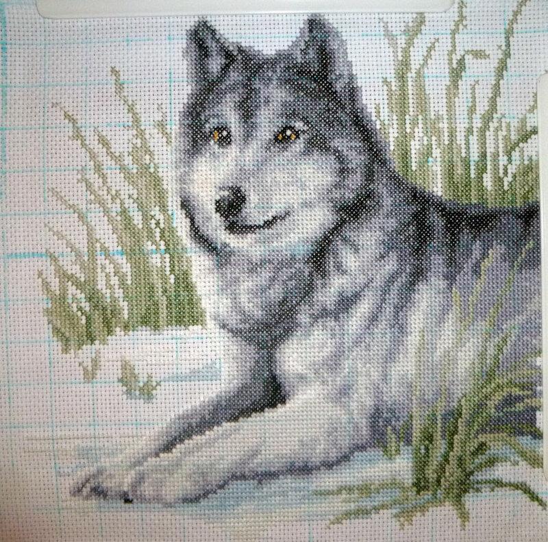 Вышивка крестом - одинокий волк.