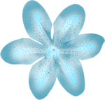 Delph_collab_sea_side (19).png