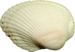 NLD I Sea You Shell (2).png
