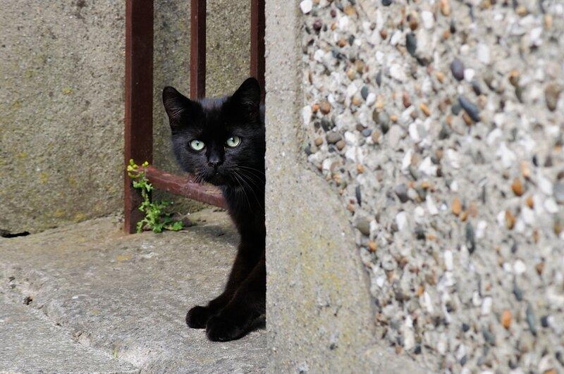 Черный кот за углом