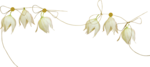 MRD_RT_white flowers-string.png