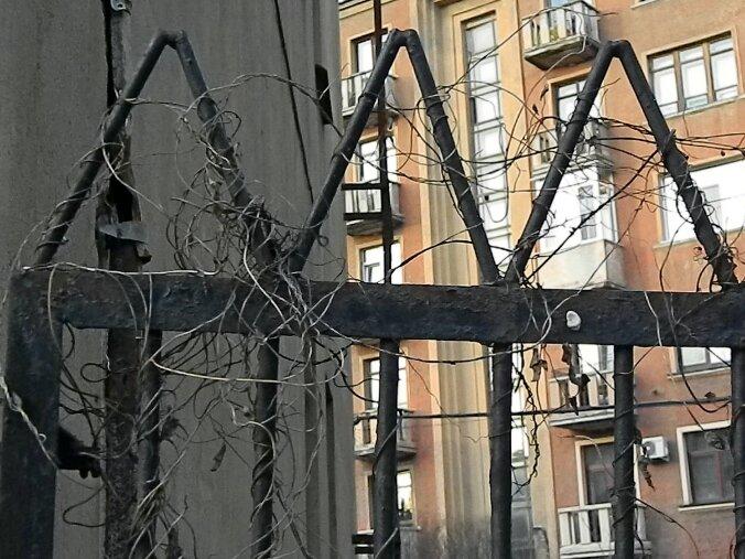 Ограда и старый плющ