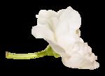 «La_magie_des_fleurs» 0_86267_e836aba8_S