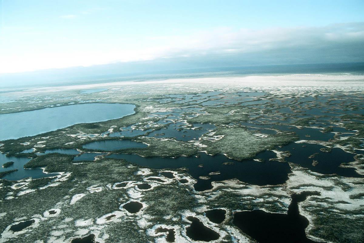10 Австралия? Снова нет! Большие Васюганские болота в Западной Сибири. Одни из самых больших болот в