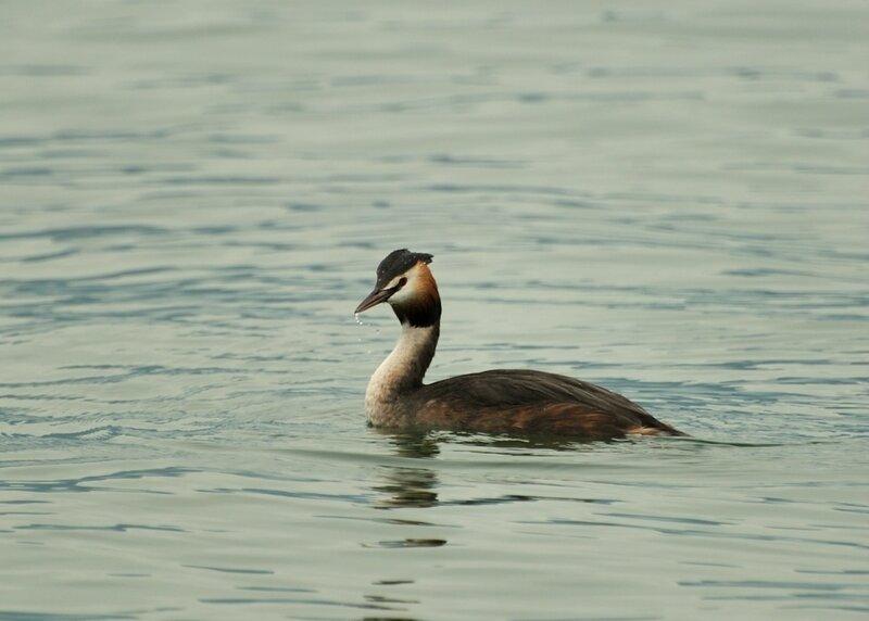 Птицы озера Гарда