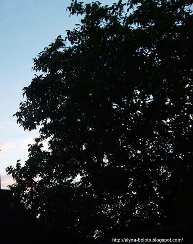 Вечернее небо 5