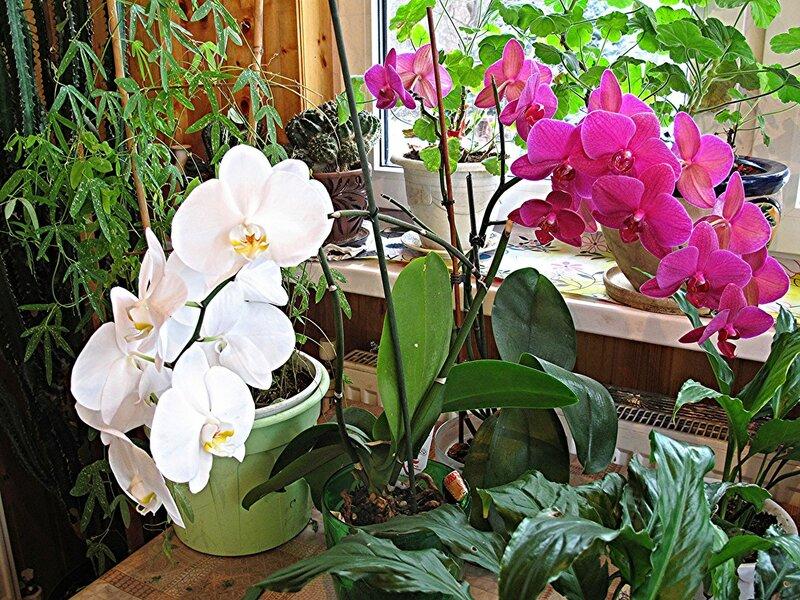 Орхидеи зимнего садика